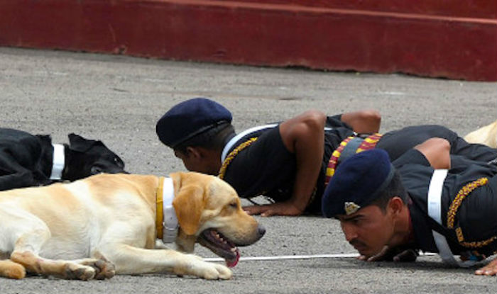 Adopt a Dog from the Army here in Delhi and Bring home a bundle of Joy