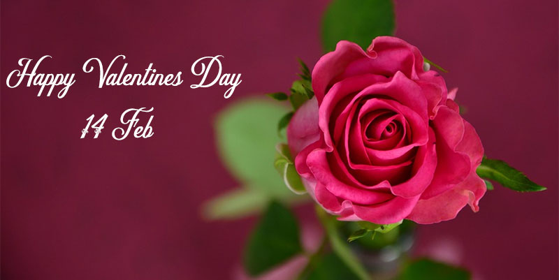 happy Valentines day message image roses