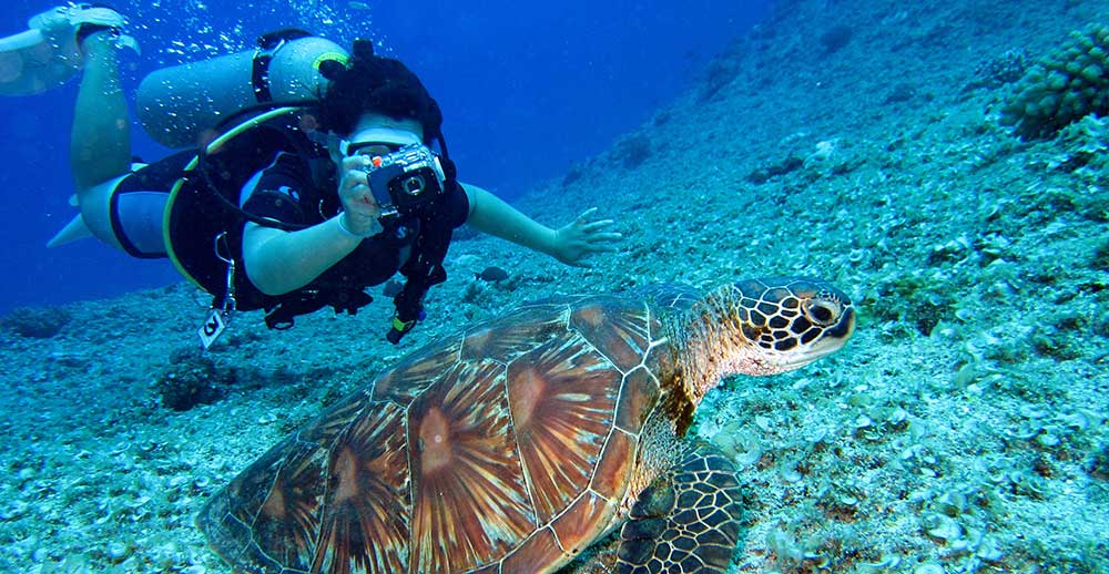 Scuba Diving with turtle image hobby