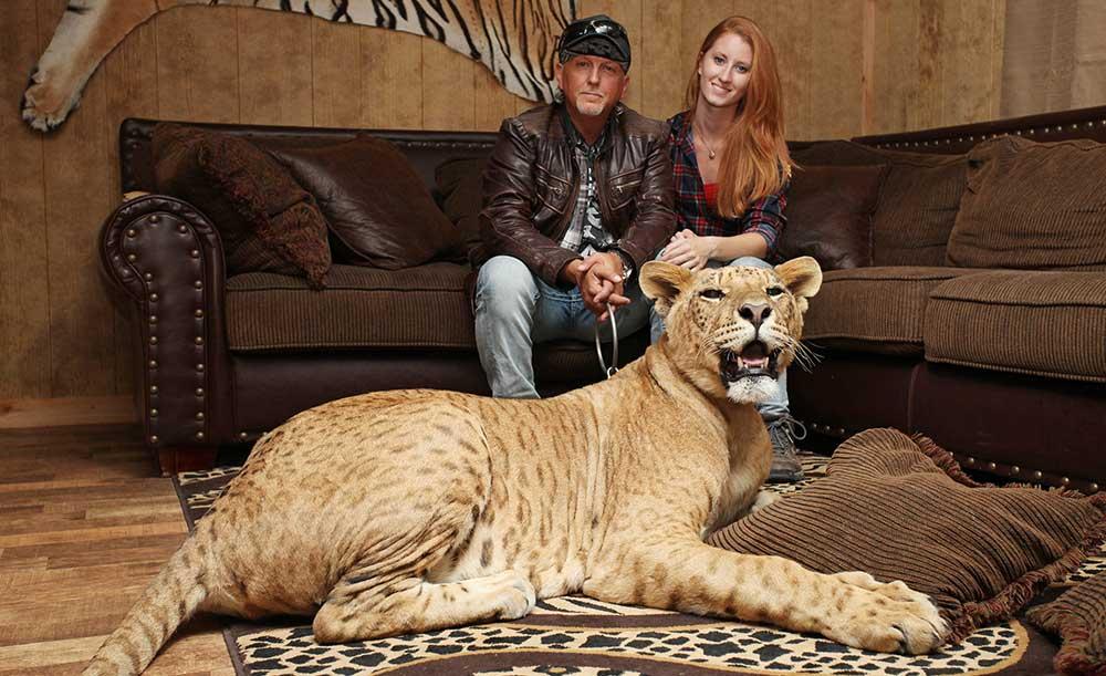tiger as pet hobby